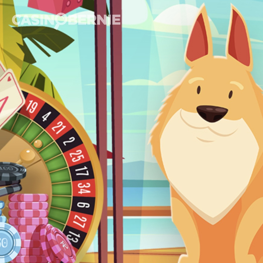 casinobernie play dingo rezension